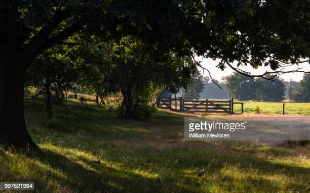 gate bergerheide - william mevissen stock pictures, royalty-free photos & images