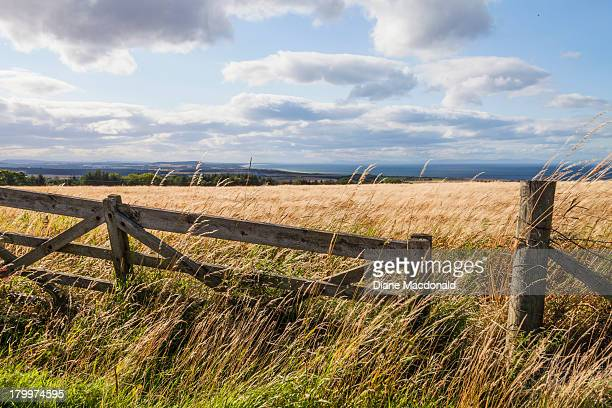 gate to a barley field - モーレイ湾 ストックフォトと画像