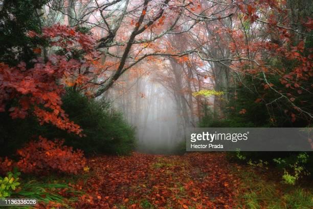 gate to the forest - hector vivas fotografías e imágenes de stock