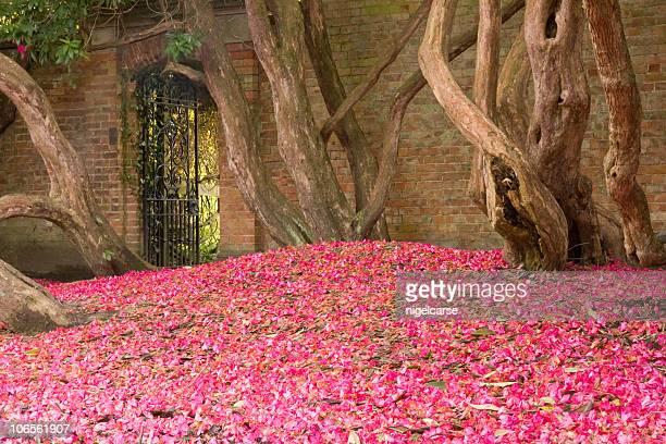 Gate to Walled Garden