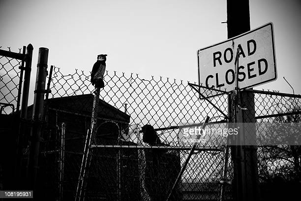 Gated Area with Road Closed Sign, Black and White