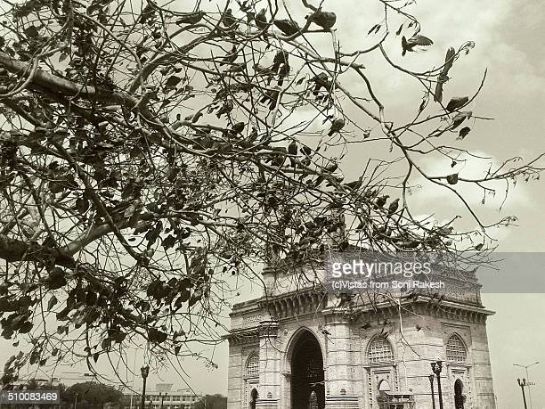 Gateway of India with a pigeon laden tree