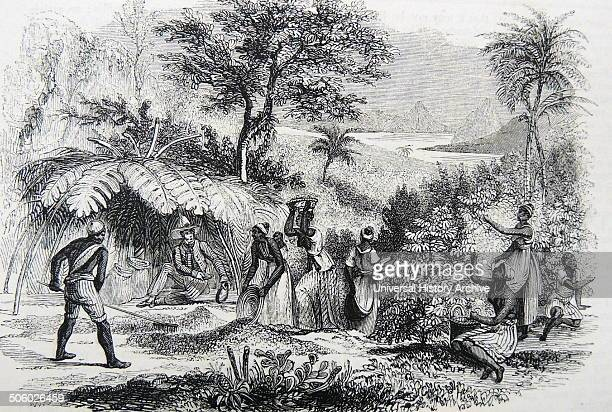 Gathering coffee beans on a plantation in Brazil Engraving London 1850 Photo by