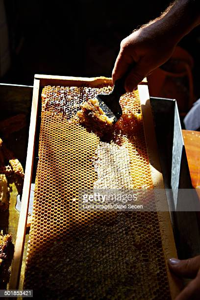 Gathering Honey From Hive, Croatia, Europe