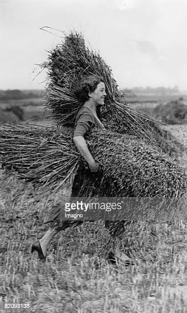 Gathering the harvest A young woman carrying two bundles of wheat Maidstone Kent England Photograph August 15th 1932 [Die Ernte wird eingeholt Eine...