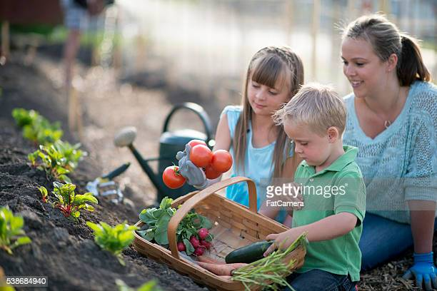 Gathering Vegetables From the Garden