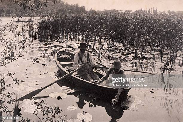 Gathering Water Lillies by Peter Henry Emerson