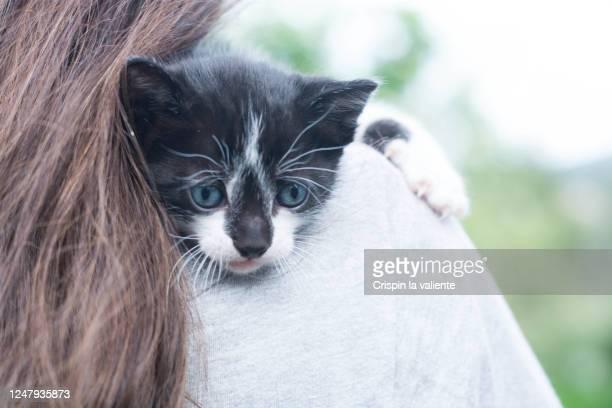 gatito blanco y negro abrazado a una chica - blanco y negro bildbanksfoton och bilder