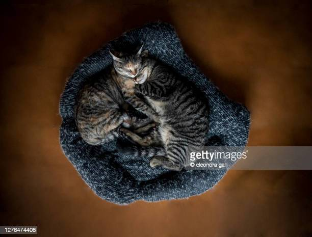 gatti che dormono - abbracciarsi a letto foto e immagini stock