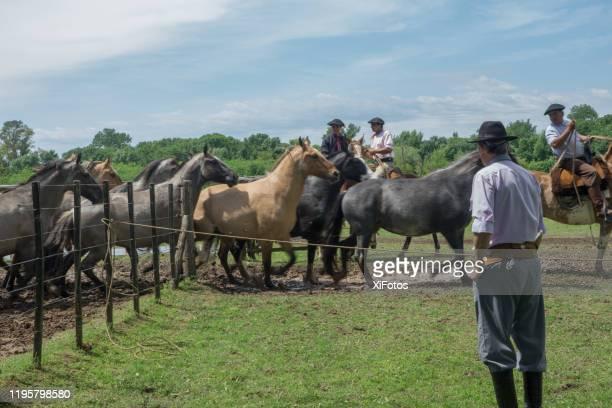 gaucho-kultur - argentinischer abstammung stock-fotos und bilder