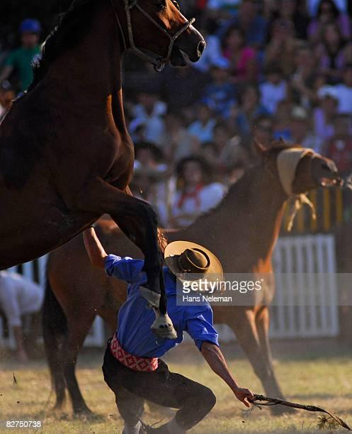 Gaucho falls off horse