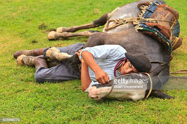 Gaucho sleeping with horse on grass