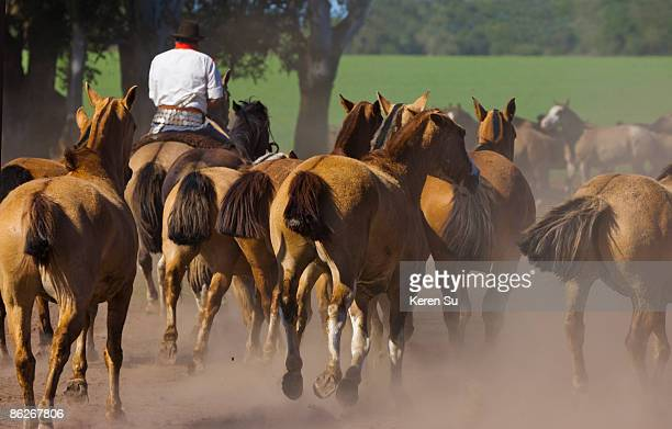gaucho with horses on a ranch, argentina - argentina traditional clothing stock photos and pictures