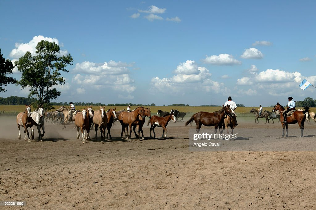 Gauchos and Horses on a Ranch, Buenos Aires, Argentina : Stock Photo