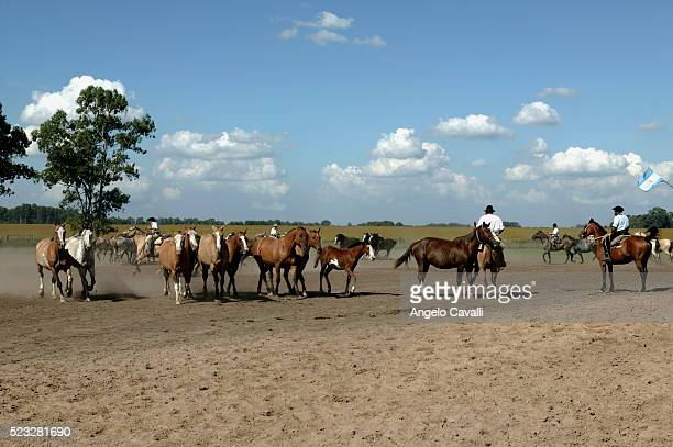 gauchos and horses on a ranch, buenos aires, argentina - argentina traditional clothing stock photos and pictures