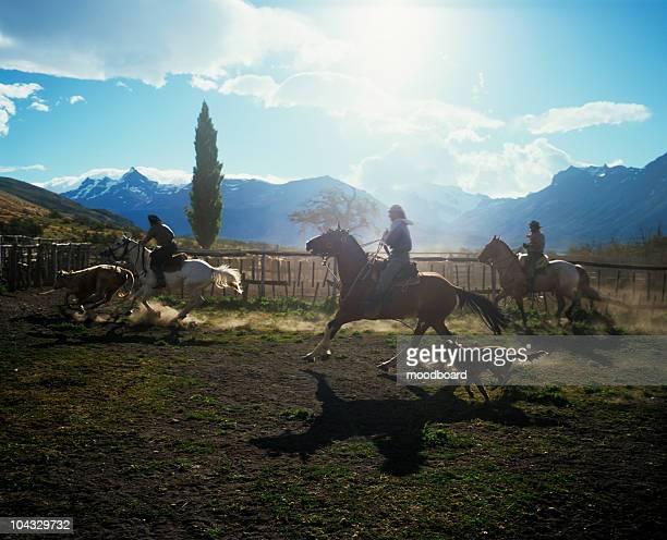 Gauchos trabajando en el ganado Ranch