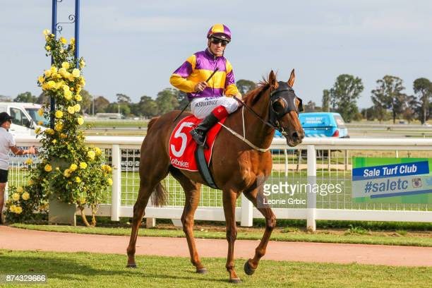 Gauteng Gal ridden by Brandon Stockdale returns after winning the James Yeates Printing BM64 Handicap at Sale Racecourse on November 15 2017 in Sale...