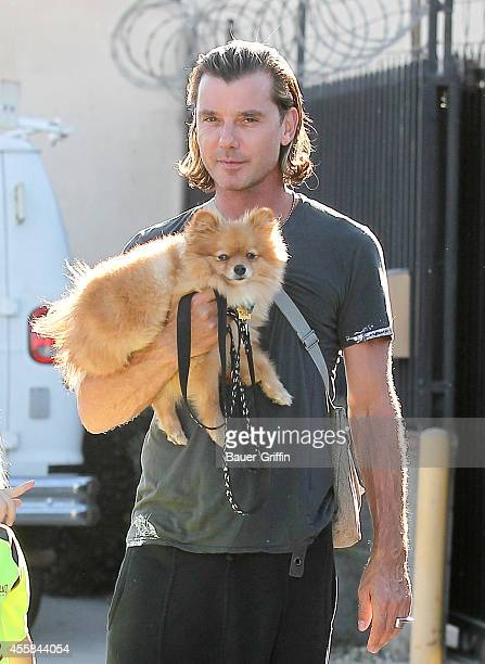 Gavin Rossdale is seen on September 20 2014 in Los Angeles California