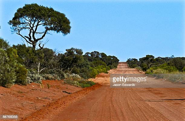 A red sandy track leading through mallee country in the Gawler Ranges.