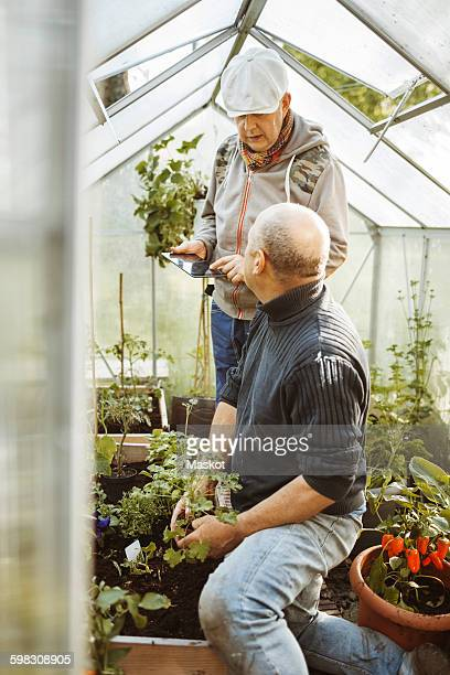 Gay couple discussing over digital tablet while gardening in small greenhouse