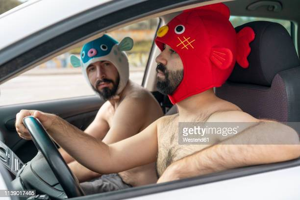 gay couple in a car wearing animal hats - dressed undressed stock-fotos und bilder