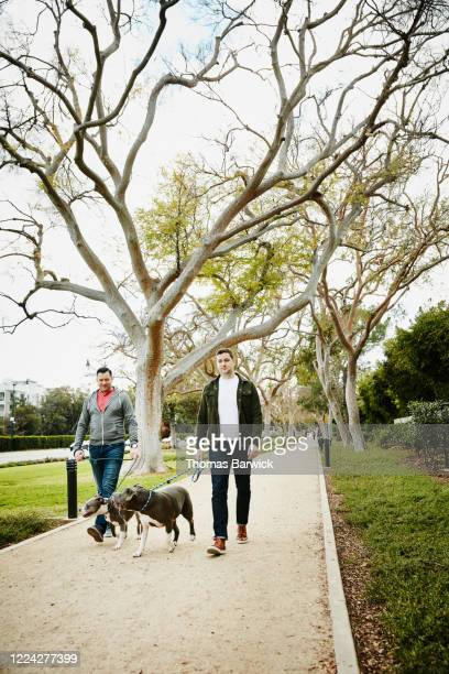 gay couple walking pit bulls on pathway in park - coat stock pictures, royalty-free photos & images