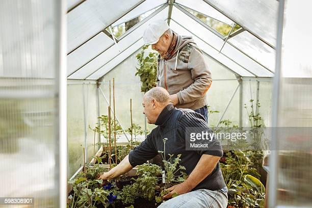 Gay men gardening in small greenhouse