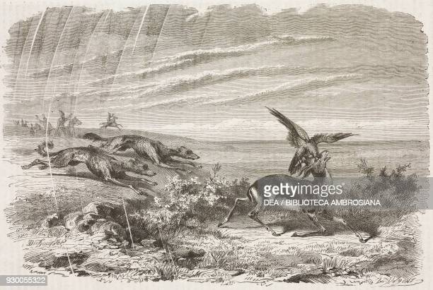 Gazelle brought down by a hawk and chased by hounds Iran drawing by Duhousset from Hunting in Persia by Emile Duhousset from Il Giro del mondo...