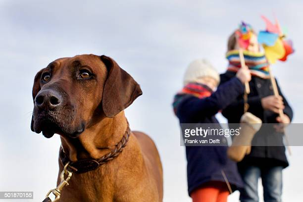 gazing dog with boy and girl and paper windmills at coast - girl blows dog stock photos and pictures