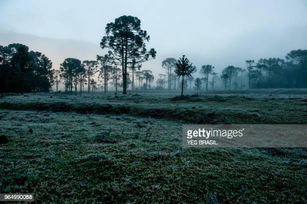 geada em urubici na serra catarinense - hügelkette stock-fotos und bilder
