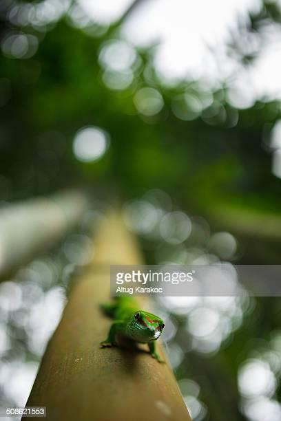gecko - altug karakoc - fotografias e filmes do acervo
