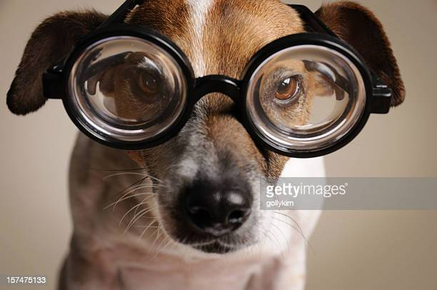 Geeky Dog