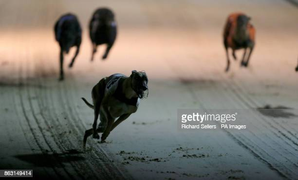 Geelo Zip before winning the Angel of the North Oaks Final Race seven at Newcastle during the William Hill All England Cup Festival at Newcastle...