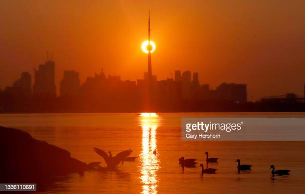 Geese float in Lake Ontario as the sun rises behind the CN Tower on a day an excessive heat warning was issued on August 24, 2021 in Toronto, Canada.