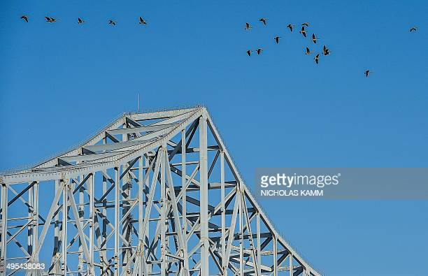Geese fly over the Commodore Barry Bridge in Chester Pennsylvania on June 2 2014 AFP PHOTO/Nicholas KAMM