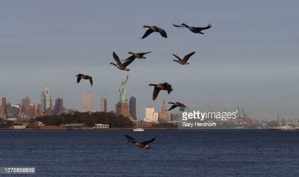 Geese fly over the skyline of Brooklyn and the Statue of Liberty as the sun sets in New York City on September 22, 2020 as seen from Jersey City, New...