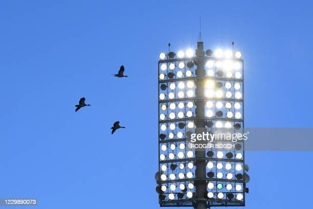 Geese fly past the floodlights during the third T20 international cricket match between South Africa and England at Newlands stadium in Cape Town,...