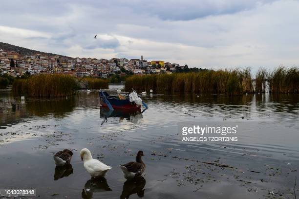 Geese stand on the shore of a lake close to the town of Kastoria northwestern Greece on September 29 2018