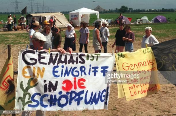 Gegner von Genversuchen an Pflanzen halten einen landwirtschaftlichen Weg entlang eines geplanten Versuchsfeldes besetzt, auf dem gentechnisch...