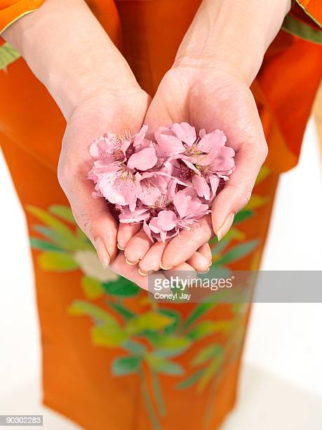 geisha holding handful f cherry blossoms - coneyl stock pictures, royalty-free photos & images