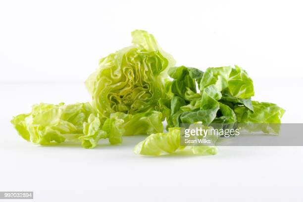 gem lettuce - lettuce stock pictures, royalty-free photos & images