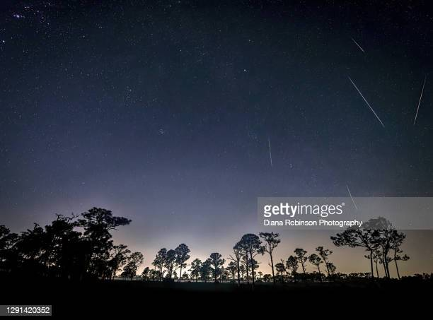 geminid meteor shower over slash pine trees in fred c. babcock/cecil m. webb wildlife management area near punta gorda, florida - geminid meteor shower stock pictures, royalty-free photos & images