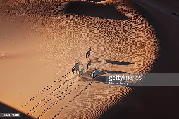 Gemsboks (Oryx gazella) In typical desert habitat, Namib desert, Namib-Naukluft National Park, Namibia, Africa