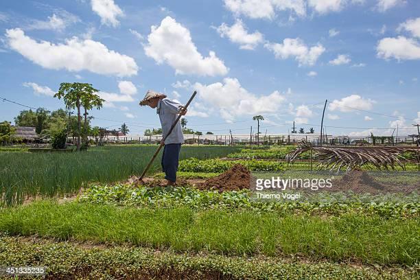 CONTENT] Gemüsebauer in Hoi An Vietnam Ernte