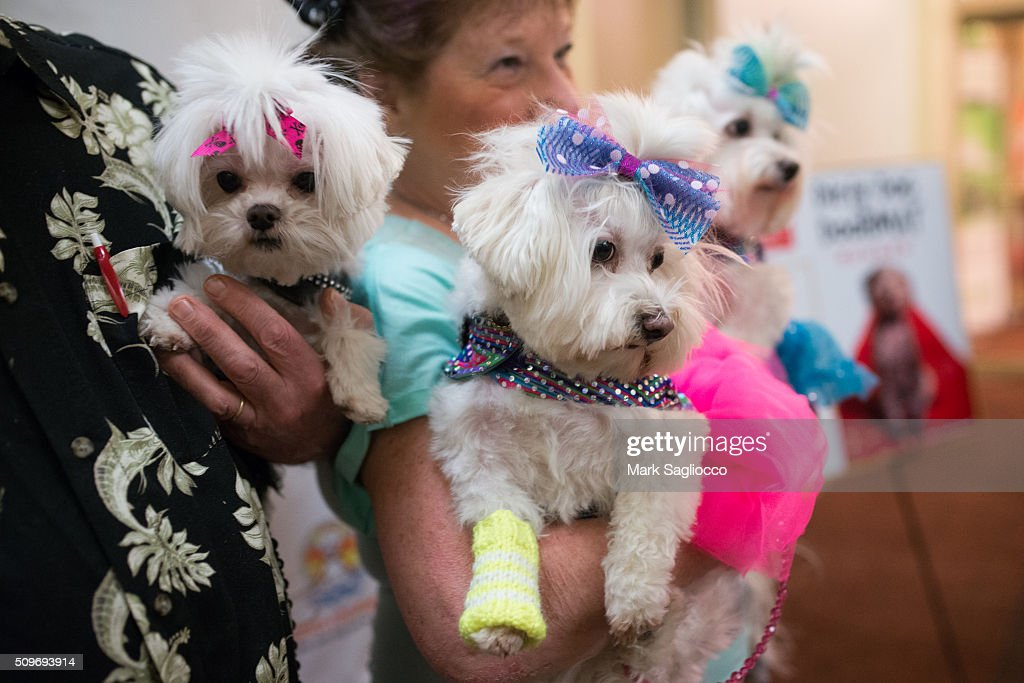 General atmosphere of the 12th Annual NY Pet Fashion Show at Hotel Pennsylvania on February 11, 2016 in New York City.