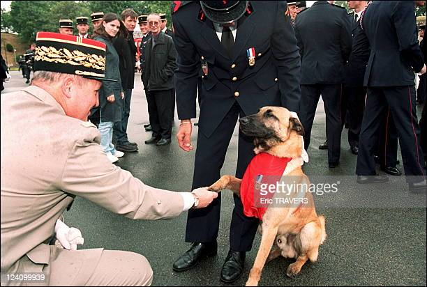 General Debarnot gratifies dog Malouk with bronze medal of bravery of the Paris fire brigade In Paris, France On July 01, 2002.