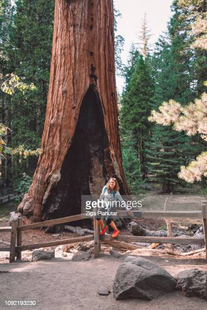 general grant - seqouia national park - sequoia national park stock pictures, royalty-free photos & images