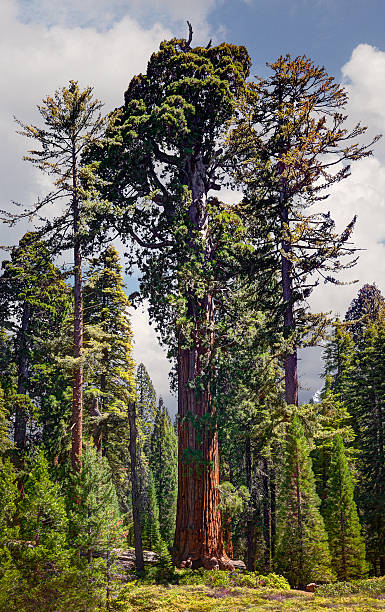 General Grant Sequoia Tree, Kings Canyon