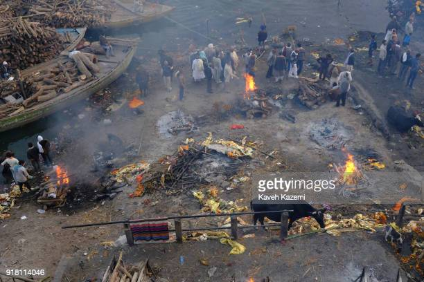 A general scene of the cremation ground in Manikarnika Ghat by the Ganga River seen with peopleu2019s activity burning pyres cows hanging around and...