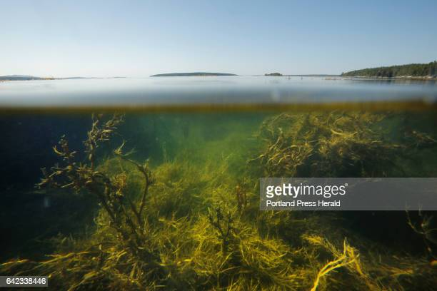 General splitwaterline images of the Gulf of Maine taken at Curtis Cove in East Blue Hill on Sunday September 6 2015